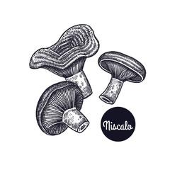Vintage engravings mushrooms Niscalo.