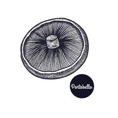Vintage engravings mushroom Portobello.