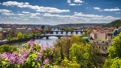 The blooming bush of lilac against Vltava river and Charles bridge, Prague