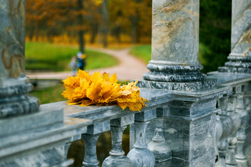 A wreath of maple leaves, the Catherine Park, Pushkin town