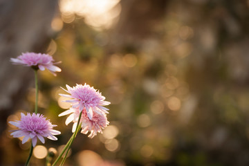 Lovely pink flowers on a natural sunset bokeh background