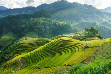 Foto auf Gartenposter Reisfelder Terraced rice field in harvest season in Mu Cang Chai, Vietnam. Mam Xoi popular travel destination.