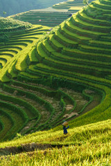 Papiers peints Les champs de riz Terraced rice field in harvest season in Mu Cang Chai, Vietnam. Mam Xoi popular travel destination.