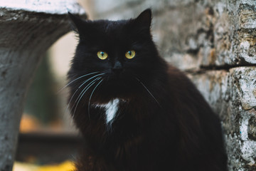 Portrait of black cat with green eyes in the vicinity of the medieval castle. Halloween concept.