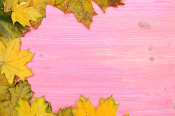 Canadian maple autumn leaves on light pink wooden board surface background with copy space..