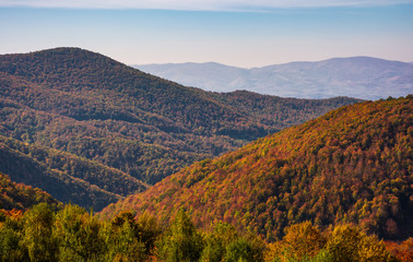 mountains with forest in red foliage. lovely nature scenery in Carpathian Mountains