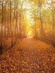 Piękny widok w lesie jesienią