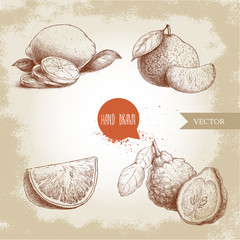 Hand drawn sketch style citrus fruits set. Lemon half, lime, tangerine, mandarine composition, oranges and bergamots. Vector organic food illustrations.