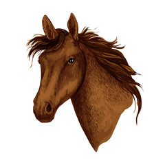 Horse animal muzzle vector sport racehorse icon