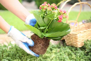 Foto op Plexiglas Tuin Woman planting flowers in garden