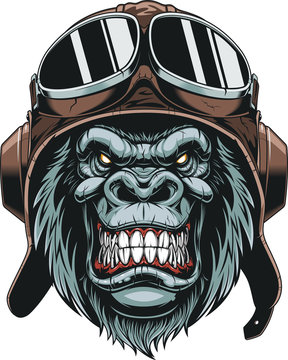 Monkey in helmet pilot
