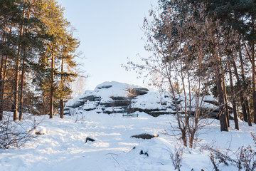 Winter landscape. Sunlit pine forest and snow-covered big stones.