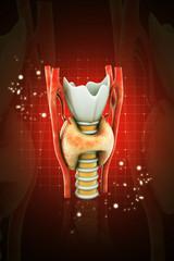 3d rendered Endocrine parathyroid gland on a dark background