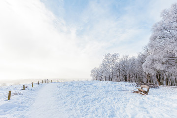 Winter scene with snow on the Dutch Posbank