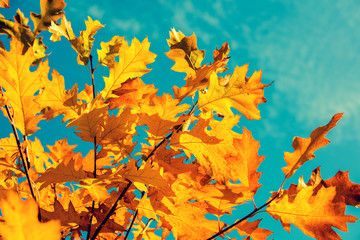 Oak branch with orange leaves in the forest in autumn