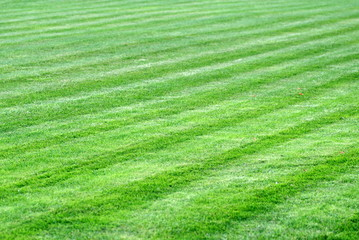 pasy na skoszonym trawniku