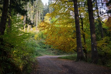 Paths in forest covered by leaves with colorful trees during autumn fall. Slovakia