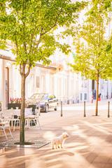 강아지 유럽 여행 해외 외국 풍경 공원 헝가리 개 부다페스트 건물 건축 거리