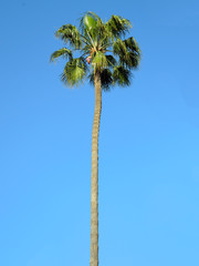 Coconut palm in the sky