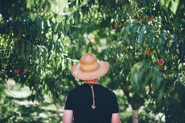 Man from Behind in a Peach Orchard