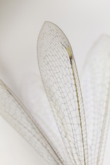 Dragonfly wings abstract