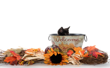 Cute black kitten in welcome bucket