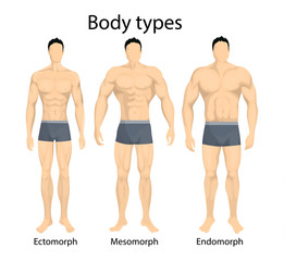 Male body types.