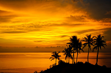 Silhouettes of palm trees, bright yellow clouds, romantic beach on a tropical island during sunset.