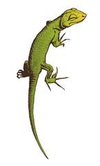 Green lizard vector hand drawn illustration