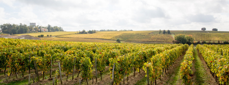 Panorama french vineyards landscape on the vines near Bordeaux in France Europe