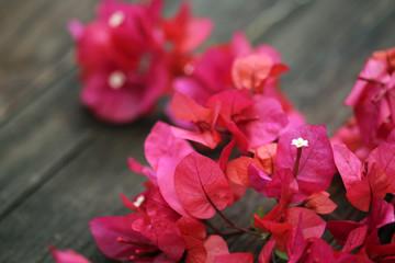 Vibrant Pink Bougainvillea Flower Petals