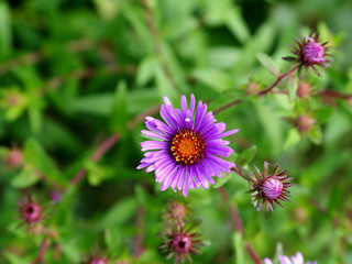 Purple flower with green leaves as background