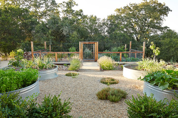 Outdoor container vegetable garden in backyard in Sonoma, California