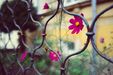 Flower on te street