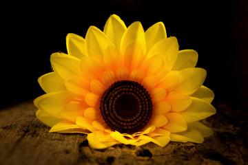 yellow sunflower. dark. night.  wood