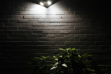 Plants on side of house lit by spotlights