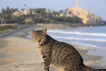 A cat sitting near the old Jaffa Port in Tel Aviv