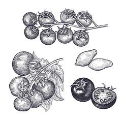 Tomatoes isolated on white baskground.