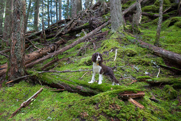 A young dog stands in the forest with his paws on a log