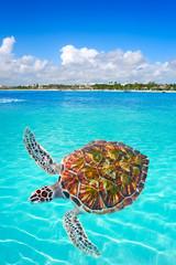 Wall Mural - Akumal beach turtle photomount Riviera Maya