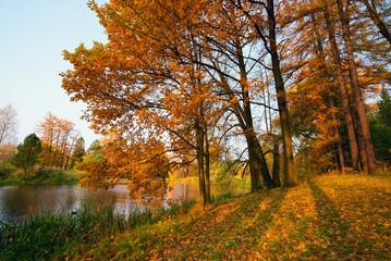 Park in the fall. Fallen leaves - Autumn landscape