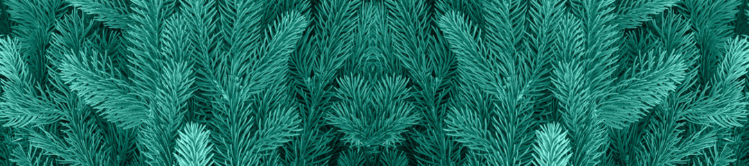 Wall Mural - panorama  conifer evergreen fir trees