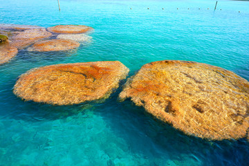 Wall Mural - Stromatolites in Bacalar Lagoon of Mexico