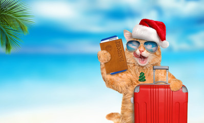 Red cat with a suitcase and document  on the sea background. Christmas.