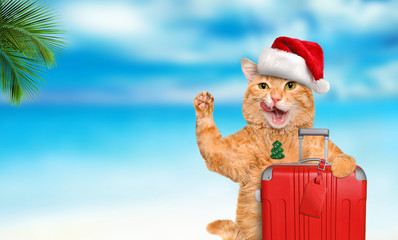 Red cat with a suitcase  on the sea background. Christmas.