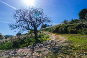 Tree Clouds and Asphodel Sardinian, San Teodoro, Sardinia, Italy