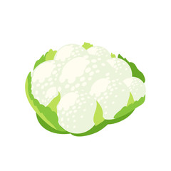 Vegetables. Head of cauliflower with leaves. Vector illustration cartoon flat icon isolated on white.