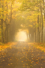 Autumn Misty Road.