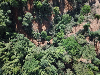 Deforestation. Logging. Trees in rainforest knocked down to make way for palm oil production