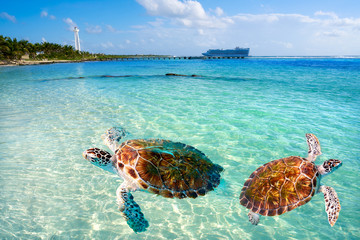 Photo sur Plexiglas Caraibes Mahahual Caribbean beach turtle photomount